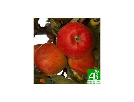 Pommes Braeburn Bio