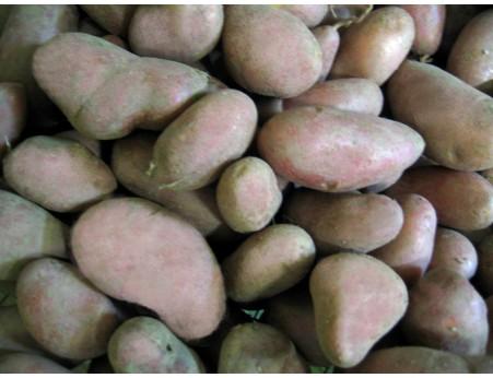 Pommes de terre Grenadine