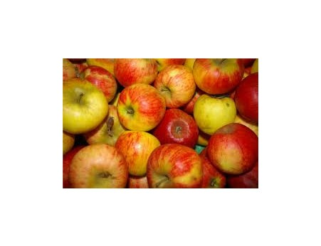 Pommes Elstar Bio