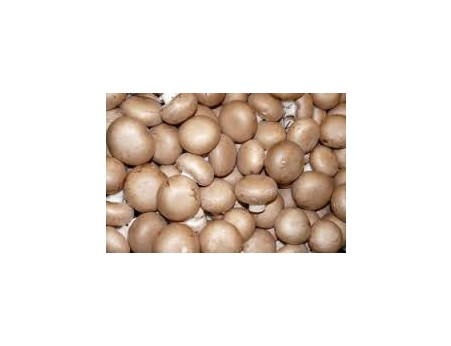 Champignon de Paris blond 500g