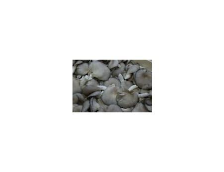 Pleurote grise