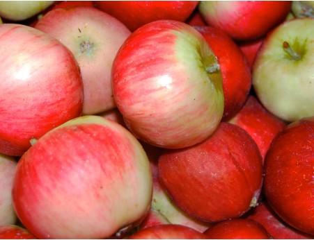 Pommes Akane Bio