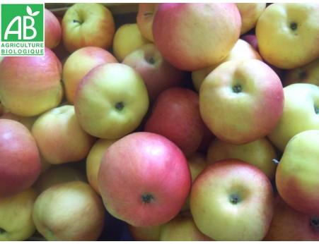 Pommes Idared bio