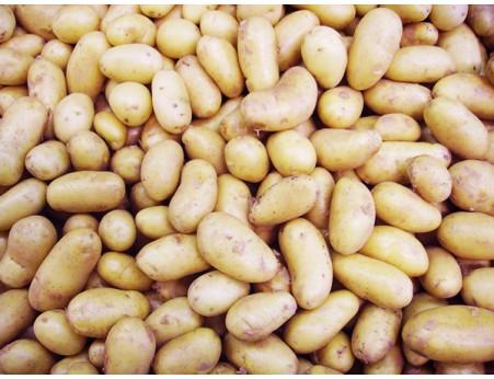 Pommes de terres Charlotte grenaille