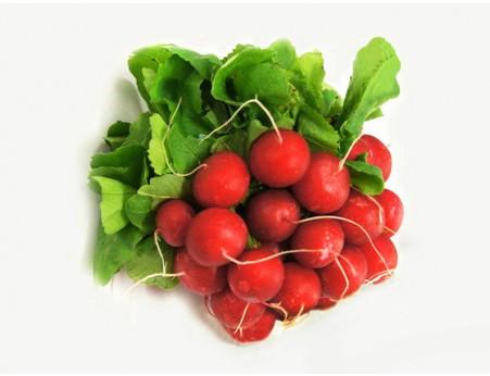 Botte de radis rouges