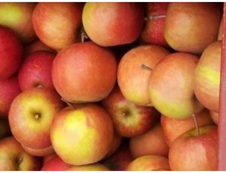 Pommes Rafzubin (Rubinette)